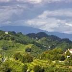 montebelluna (colli trevigiani)